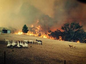Sampson Flat fire in the Adelaide Hills, photo ny Eugene Klaebe, from http://www.abc.net.au/news/2015-01-03/adelaide-hills-face-most-dangerous-fire-day-since-ash-wednesday/5998294